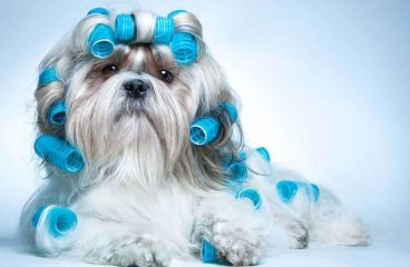 Do You Really Have to Groom Your Dog All the Time!